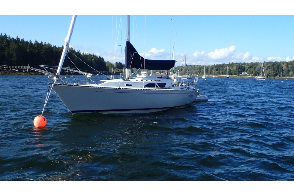 1989 C&C 33 Boats for Sale - East Coast Yacht Sales